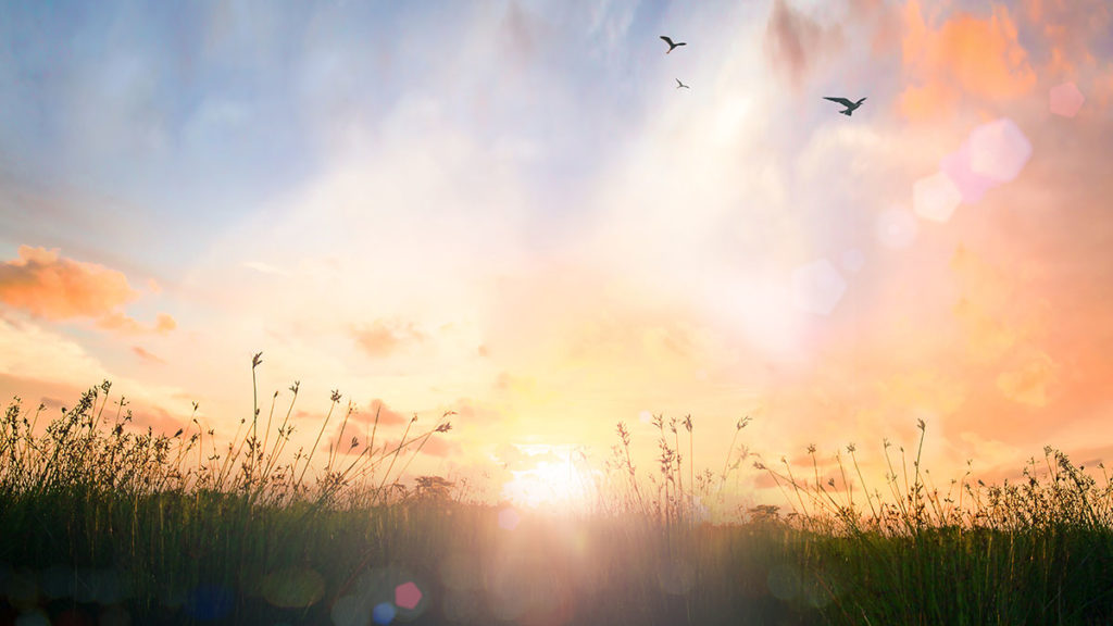 World environment day concept: Beautiful meadow and sky autumn s